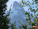 The Aiguille du Midi in Chamonix, through trees